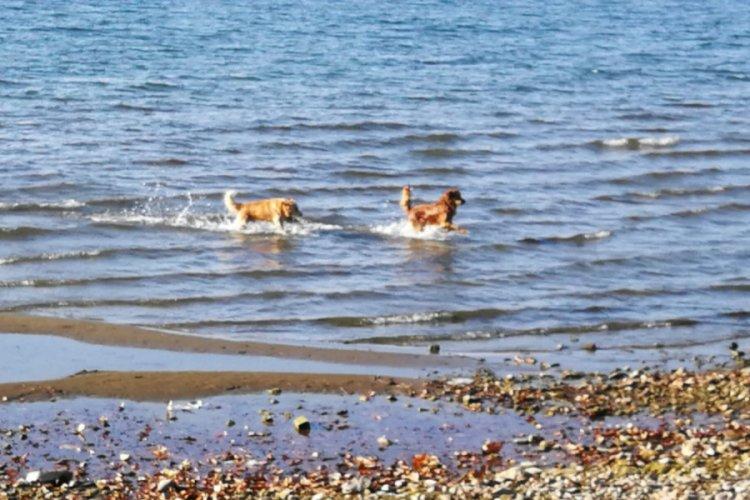 İznik Gölü'nün Tadını Onlar Çıkardı