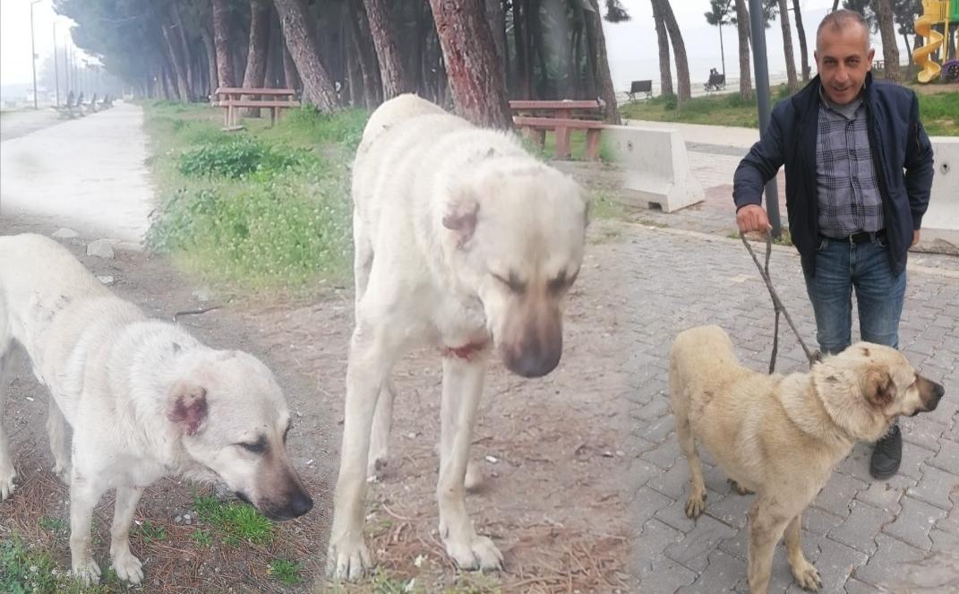 Yalnız Ve Yaralı Köpeğe Şefkat Eli